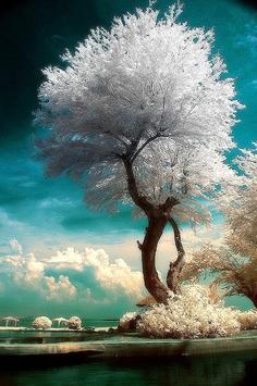 手机壁纸:超梦幻的树木与天空