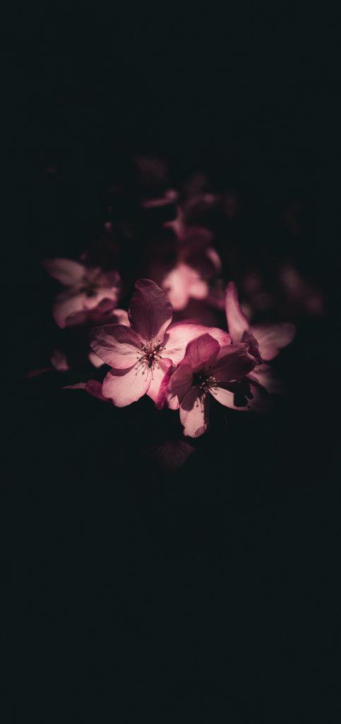 怒放鲜花超清壁纸