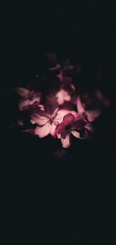 怒放的鲜花超清壁纸